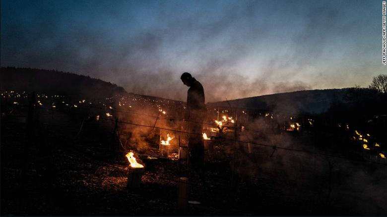 A winegrower from the Daniel-Etienne Defaix wine estate lights candles in a vineyard near Chablis, Burgundy.