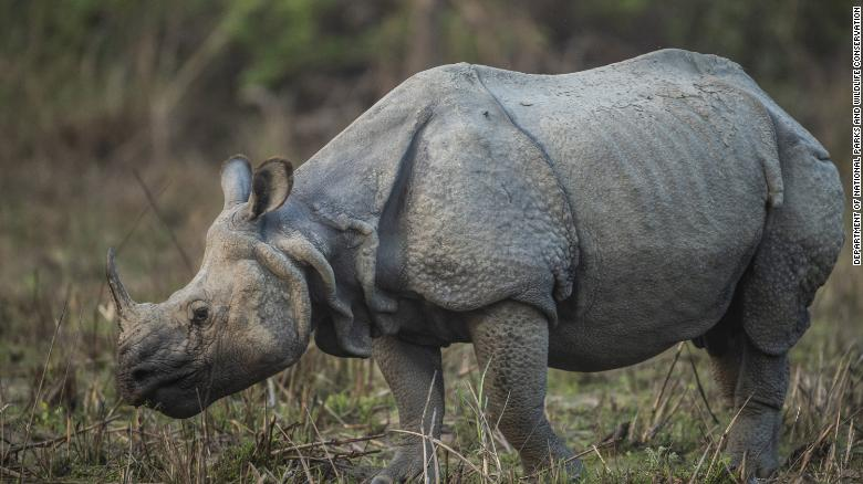 Nepal's rhino population grows to highest in decades as pandemic pauses tourism