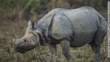 Photos provided by Nepal's Department of National Parks and Wildlife Conservation show the rising one-horned rhino population in the country.