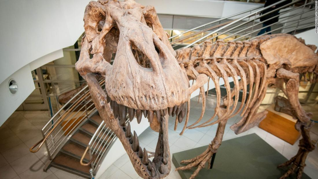 How many T. rex were there? Billions, it turns out