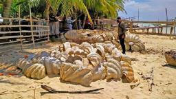 Philippines seizes fossilized giant clam shells worth  million