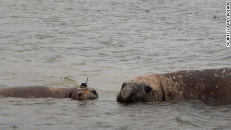 The project run by the Seal Mammal Research Unit at St. Andrews University tags Weddell and southern elephant seals.