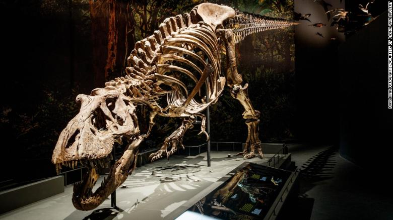 Tyrannosaurus rex walked surprisingly slowly, new study finds