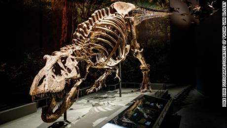Tyrannosaurus rex had a walking speed similar to many living species including humans, a new study by Dutch paleontologists has revealed.