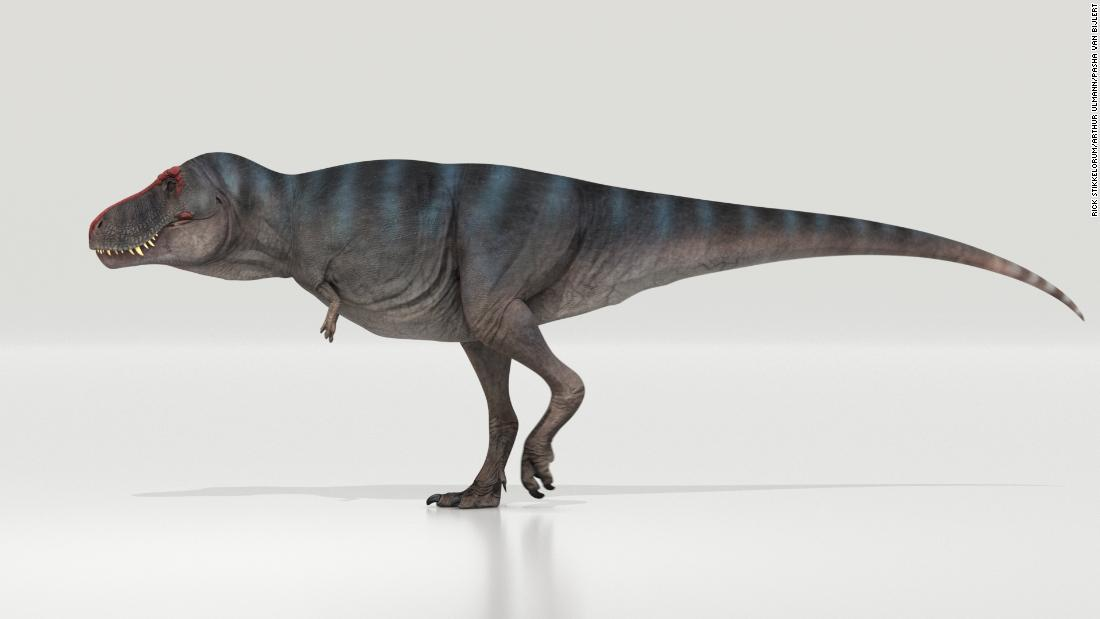 Tyrannosaurus rex walked surprisingly slowly new study finds – CNN