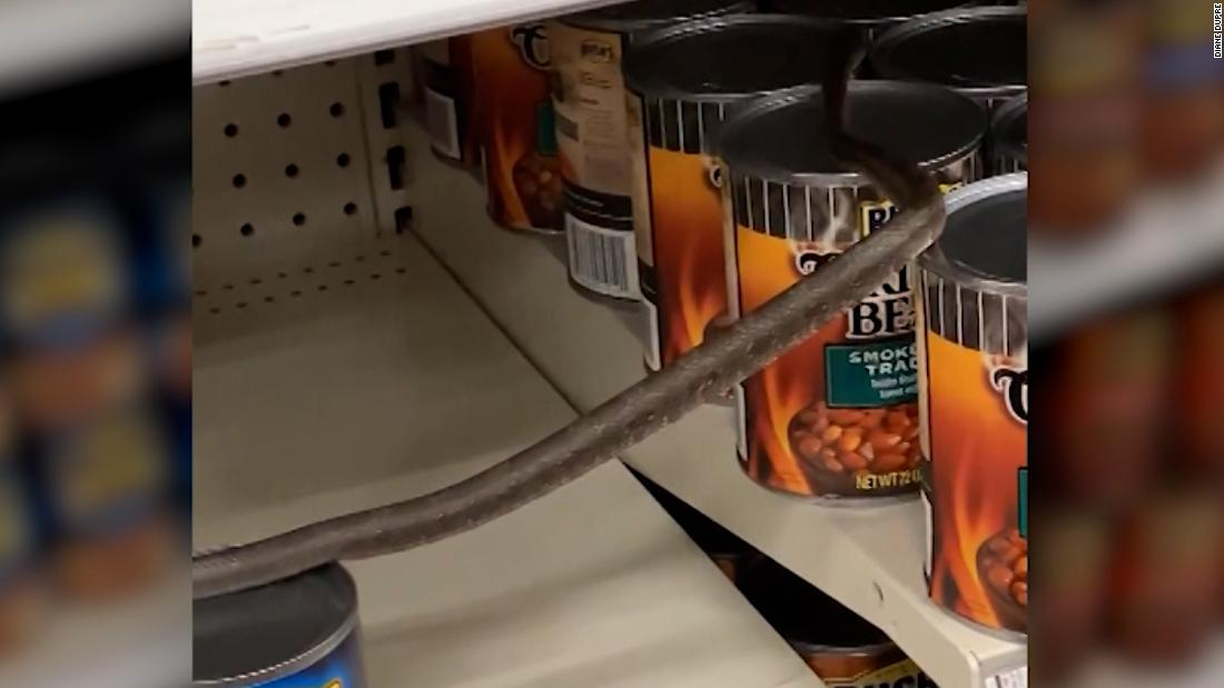 Shopper spots snake slithering across cans of beans at Target