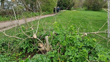 "A vandalized tree along the banks of the River Thames in the Cowey Sale area of Walton-on-Thames, Elmbridge. Locals have described the situation as an ""emergency."""