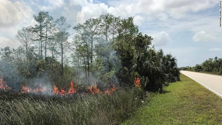 The National Park Service wants to know who's responsible for a series of fires in the Everglades