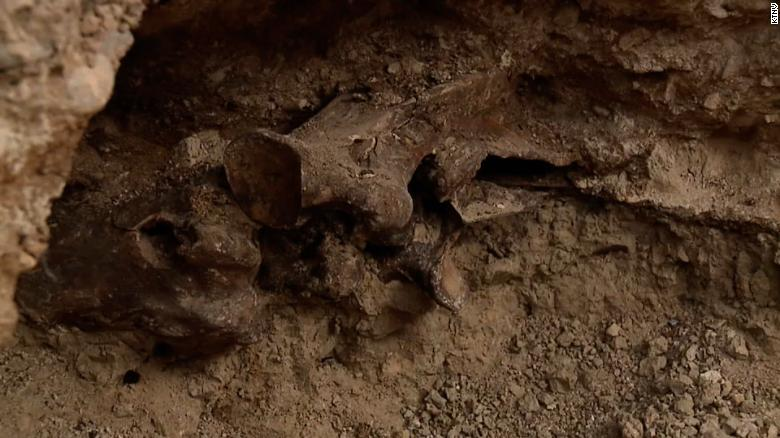 Ice Age fossil find turns Las Vegas couple's new pool into a dig site