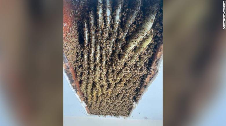 A Georgia woman was shocked to find at least 100,000 bees in her home — for the second time