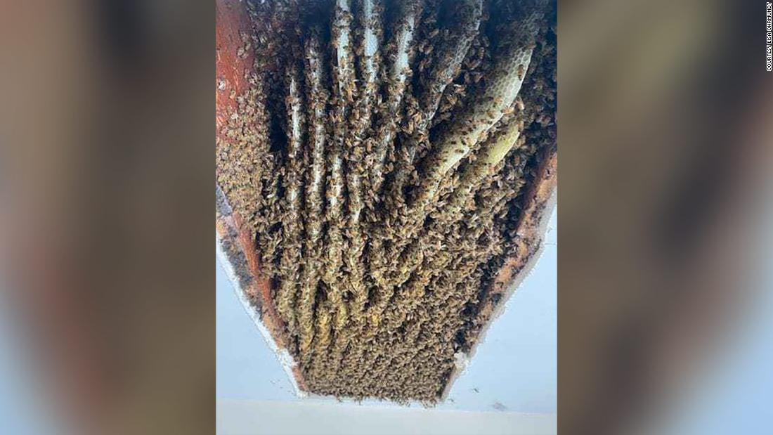Woman finds 100,000 bees in her home -- for second time