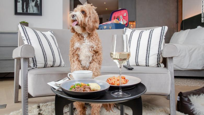 Hilton launches a dog menu for pets who helped their owners through the pandemic