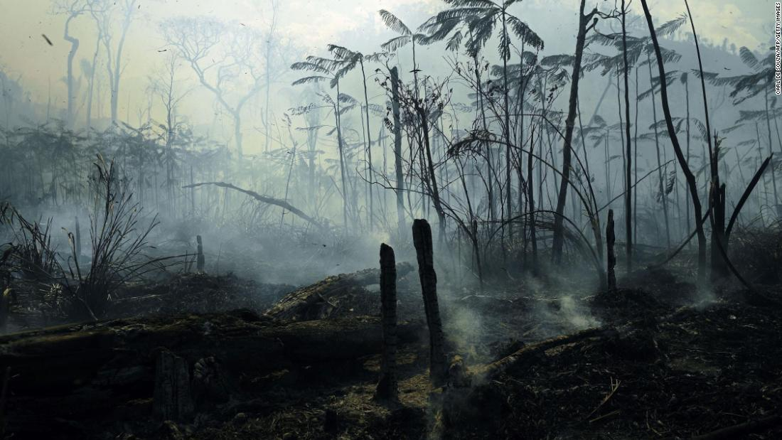 Aldi and other big grocers threaten to boycott Brazil over deforestation in the Amazon