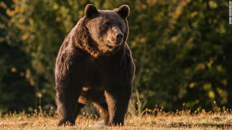 A Liechtenstein prince is accused of killing one of Europe's biggest bears