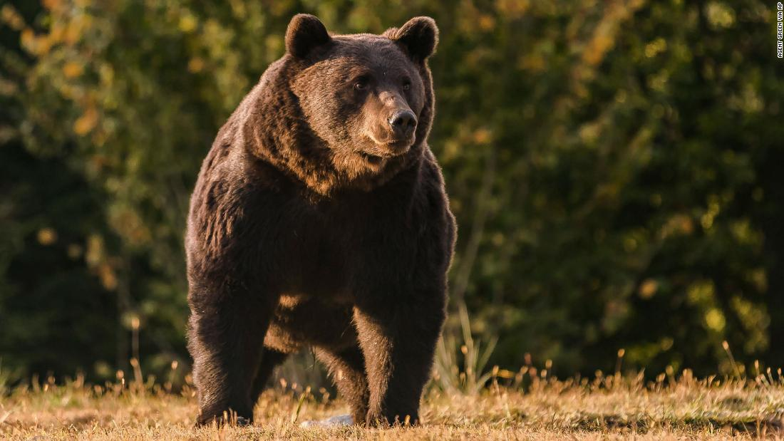 A prince is accused of killing one of Europe's biggest bears