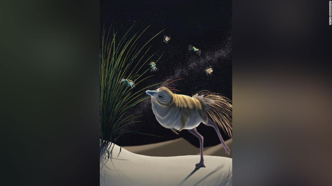 This tiny dinosaur hunted in the dark and heard better than an owl