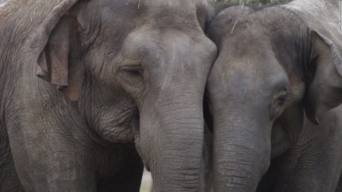 Former circus elephants arrive at wildlife sanctuary