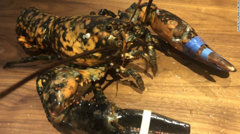 An extremely rare calico lobster was rescued from a Red Lobster in Virginia