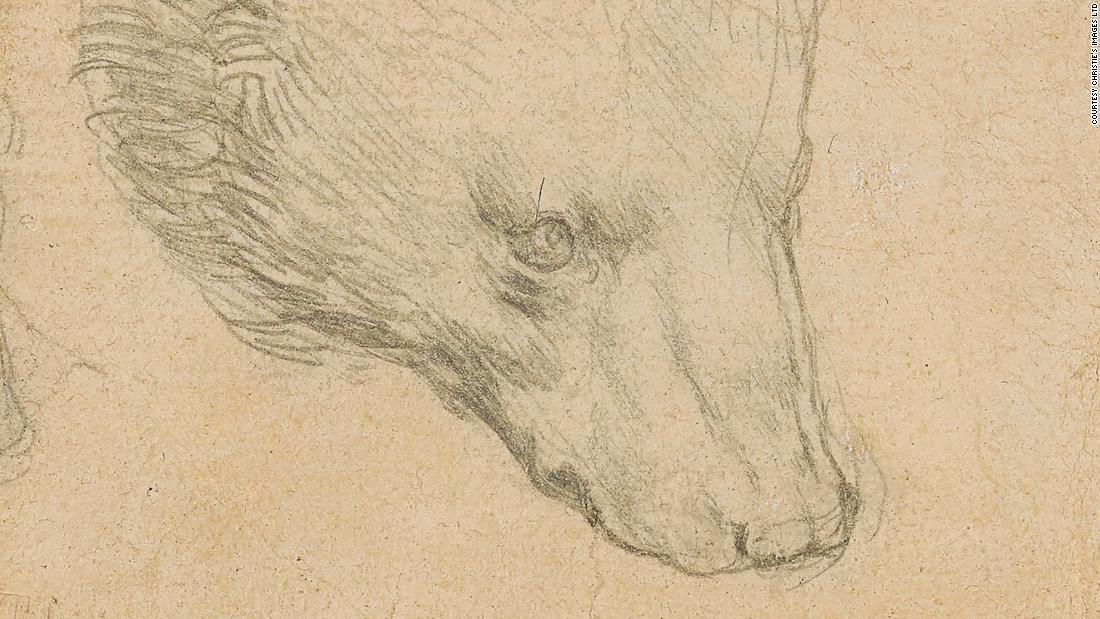 Tiny Leonardo da Vinci bear sketch could fetch over $16M