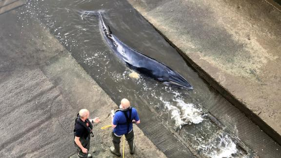 Rescue attempts are made as a small whale stranded in the River Thames is seen in this picture obtained from social media in London, Britain, May 9, 2021. DAVID KORSAKS @dkfitldn/via REUTERS THIS IMAGE HAS BEEN SUPPLIED BY A THIRD PARTY. MANDATORY CREDIT. NO RESALES. NO ARCHIVES.     TPX IMAGES OF THE DAY