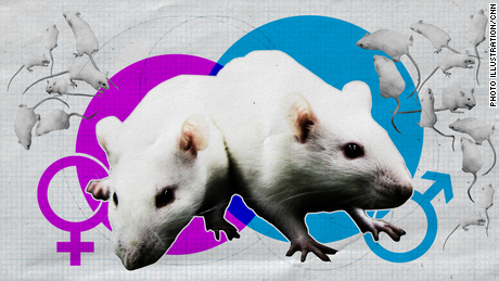 Lab rats are overwhelmingly male, and that's a problem