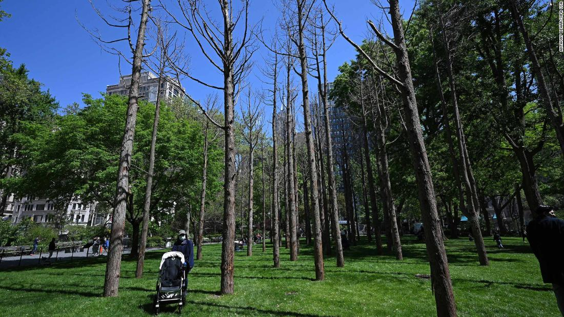 Artist Maya Lin planted dead trees in a Manhattan park to show impacts of climate change
