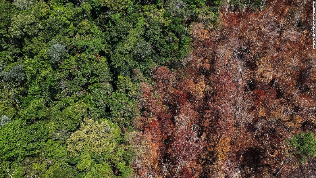 How the Amazon rainforest could become a savannah  - CNN Video