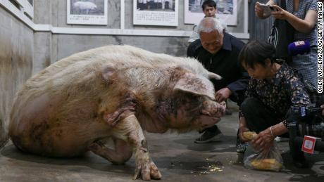 Zhu Jiangqiang's former owners feed him at the Jianchuan Museum on May 12, 2021 in Chengdu, China.