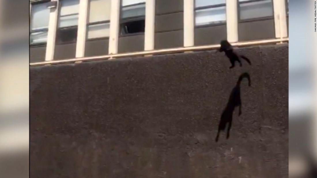 Cat makes daring five-story jump from burning building