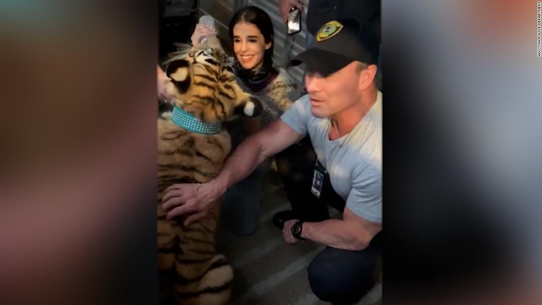 Missing tiger located unharmed, Houston police say