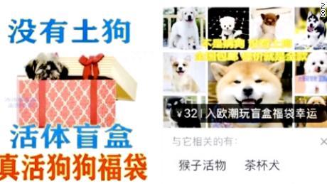 Des publicités pour des boîtes mystères pour animaux de compagnie qui ont été diffusées sur la chaîne de télévision publique chinoise CCTV. Celui de gauche promet «pas de chiens indigènes», tandis que l'autre dit