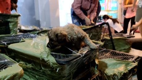 ZTO Delivery s'est excusé après le raid de Love Home, qui a trouvé des chiots comme ceux-ci dans de petites boîtes et a été contraint de payer une amende par les autorités postales du Sichuan.