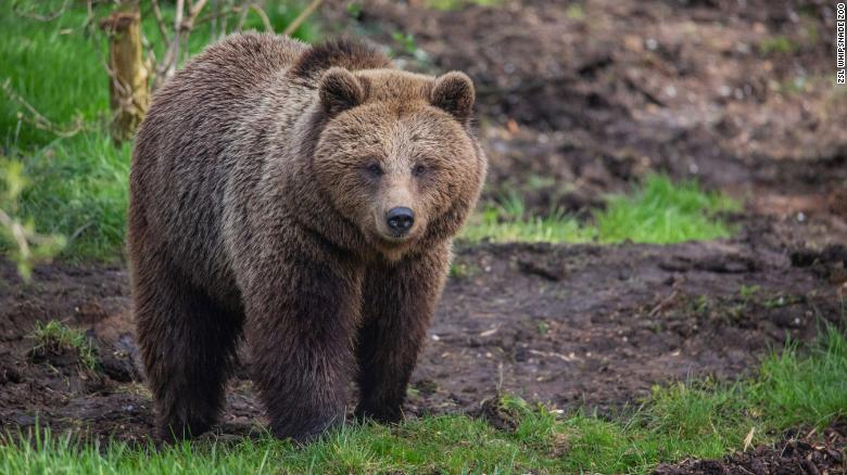 UK zoo kills two bears after they escape from enclosure