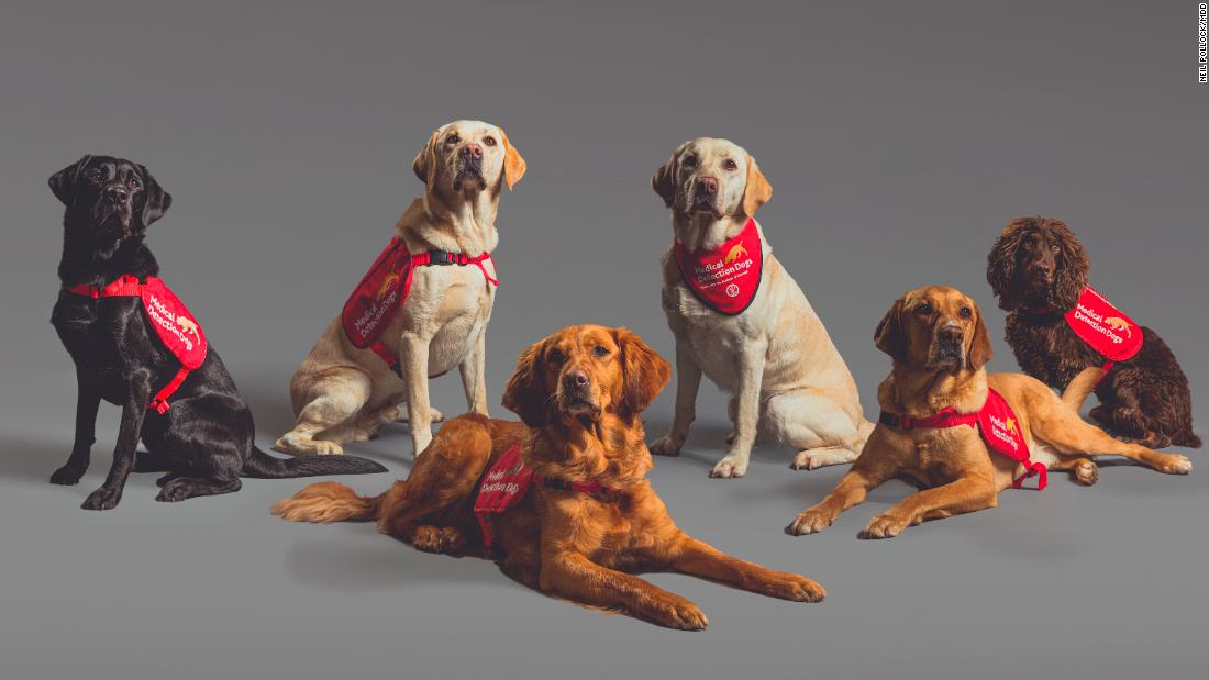 Early research suggests dogs might be able to sniff out Covid-19 infections