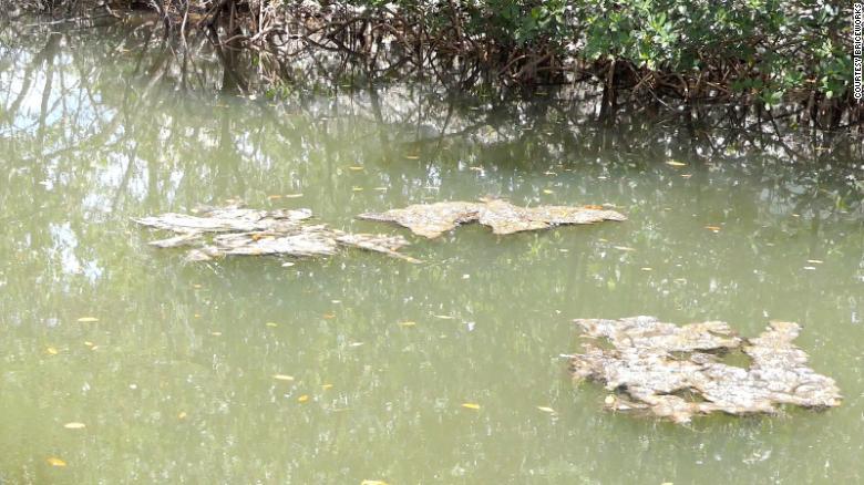 3 years ago, a massive algae bloom in Florida killed 200 tons of marine life. It's threatening again