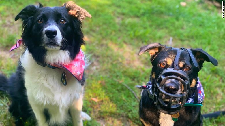 Bonnie (right) needs to be muzzled so she doesn't eat too many cicadas. Clyde (left) doesn't need a muzzle because he doesn't overindulge.