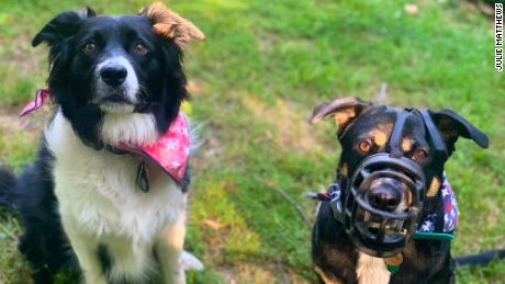 Bonnie (right) needs to be muzzled so she doesn't eat too many cicadas.  Clyde (left) doesn't need a muzzle because he doesn't abuse it.