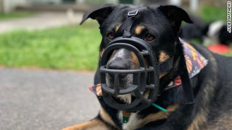 Bonnie has to wear a muzzle because cicadas are too tempting.