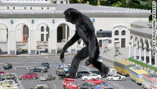 A gibbon walks amid models of vehicles at a zoo in the park of miniatures in Bakhchisaray, Crimea May 24, 2021. REUTERS/Alexey Pavlishak TPX IMAGES OF THE DAY