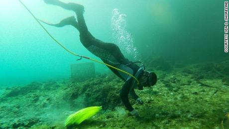 Sea & Shoreline divers, along with their agency partners and local activists, are dedicated to restoring the habitats where manatees thrive.