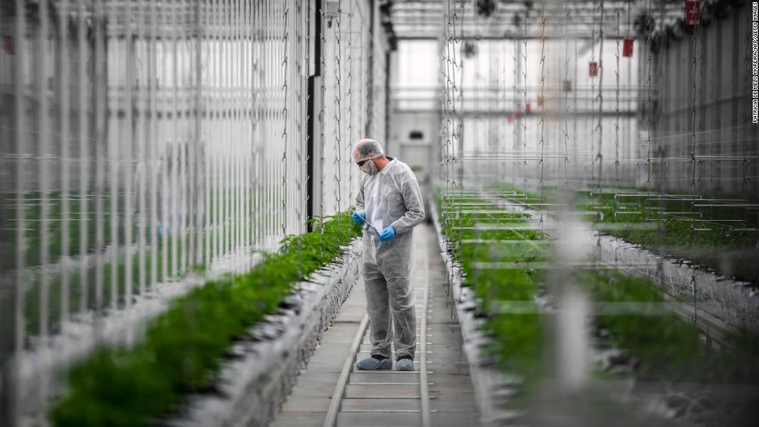 Is Amazon the spark that reignites cannabis stocks? – CNN