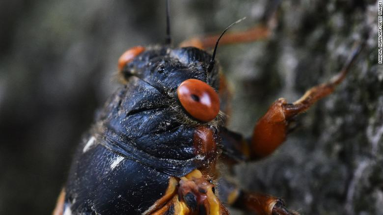 White House press charter plane delayed by cicadas