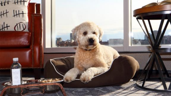 At Liberty, a Luxury Collection Hotel, you and your pet can join