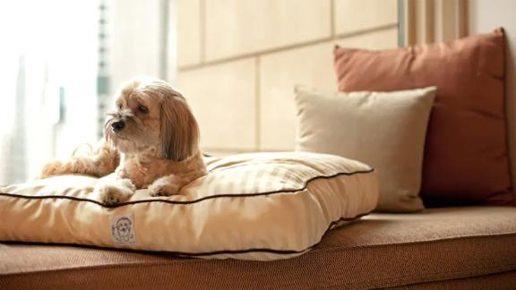 Dogs receive a plush dog bed and chew toys when checking in at The Lodge at Spruce Peak.