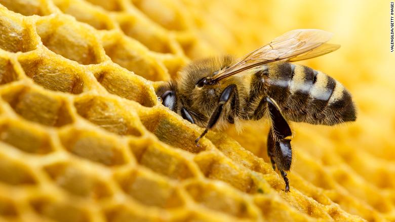 TikTok is abuzz after beekeeping influencer is accused of not practicing correct safety protocols