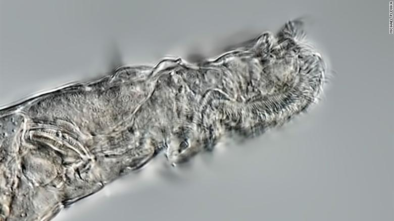This animal survived 24,000 years frozen in the Siberian permafrost