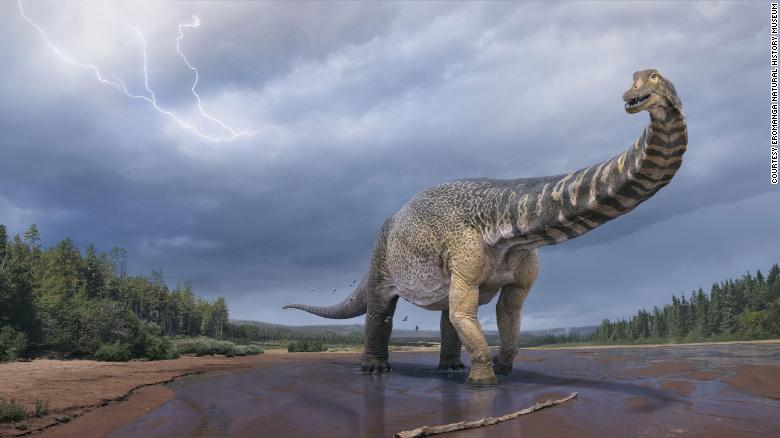 Scientists confirm discovery of Australia's largest dinosaur, two stories tall and a basketball court long
