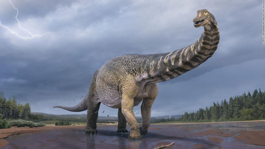 This ancient dinosaur would give today's blue whale a run for its money - CNN