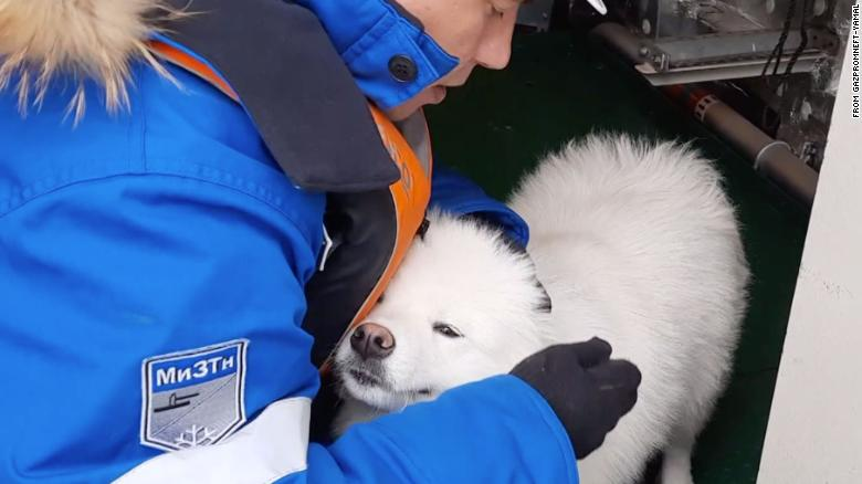 Dog rescued after wandering through Arctic ice for more than a week