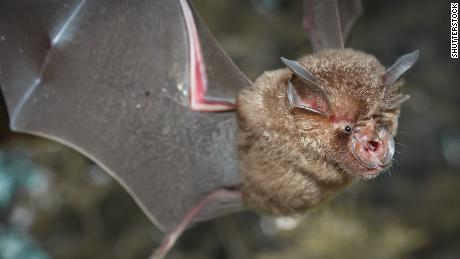 Chinese researchers find batch of new coronaviruses in bats